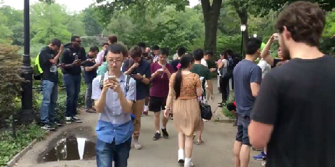 Pokemonspelers in Central Park