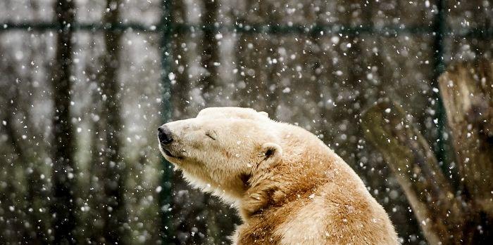 De beren krijgen lucht