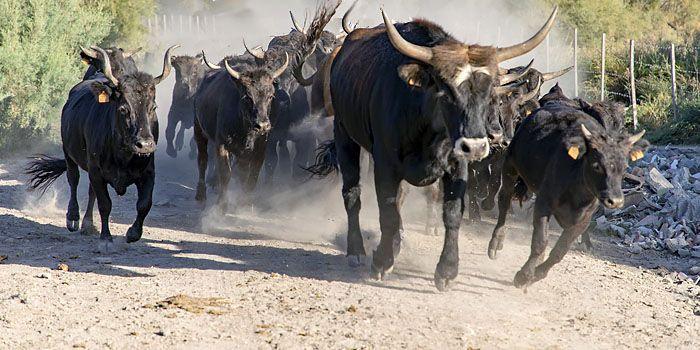 'Stierenmarkt is in de uitbundige fase'