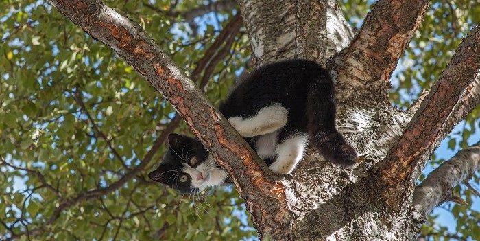 TA: De kat uit de boom kijken